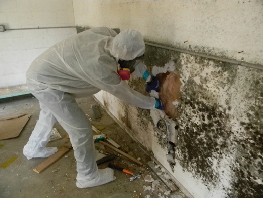 mould_remediation