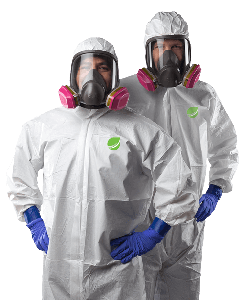 mould-removal-workers-1B